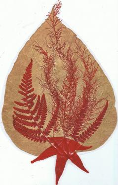 Catalpa dor� avec asperge et foug�re rouges