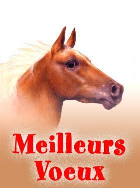 carte MEZ - Meilleurs voeux Cheval tête