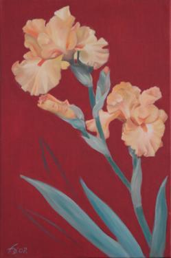 Huie sur toile 40x60 cm: Iris orange