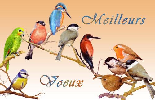 carte MEZ - Meilleurs voeux Oiseaux