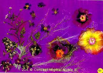 214. CHEVEUX D'ANGE.  Réalisée avec du cheveux d'ange, de la rose trèmière, pétunia & géranium  La rose trémière c'est l'ambition Le géranium c'est la distinction Le pétunia c'est l'obstacle  Reproduction Plastifiée 30/42 CM.peut être encadrée, ou servir de SET DE TABLE  Vendu en DUO frais port compris. (possible, modèles différents)  Pour 4 achetés le 5°Gratuit