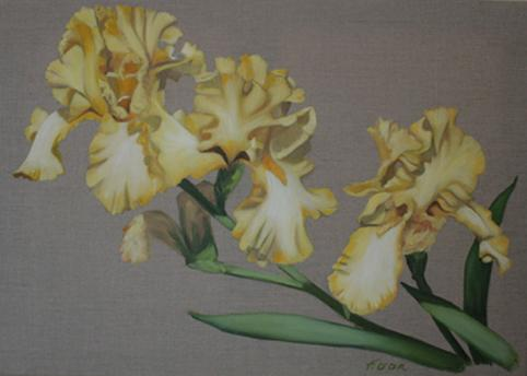 Huile sur toile 50x70 cm: Iris jaunes