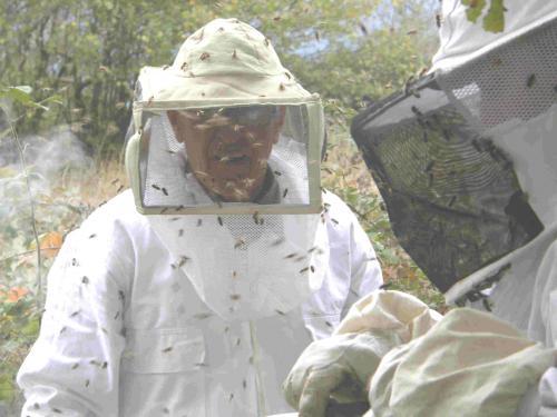 protections de l'apiculteur. Parler des abeilles, c'est présenter un métier de l'environnement accessible facilement.