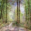HUILE SUR TOILE : CLARTE FORESTIERE