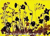 Mod�le.75 CHAMP DE COQUELICOTS  Ancolie : Tout est gris quand tu n'es pas l� ! Coquelicot : Consolation, repos. Rhododendron : Beaut�.  R�alis� avec des fleurs et diff�rents v�g�taux.   Reproduit sur support plastifi� 160 microns. Dimensions30x42cm   LE DUO exp�di� en COLISSIMO dans les 5 jours qui suivent la r�ception du r�glement  Pour 4 achet�s le 5�Gratuit