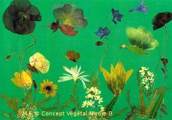 246. LE JARDIN DES PPAPILLONS (Tournseol-rose trémières- cosmos- agapanthe- deutzia-liseron fougère-carotte-coquelicot) Je réalise des sets de table avec des fleurs naturelles sélectionnées par mes soins, selon les saisons dans mon jardin & différents végétaux.  Ces reproductions se présentent sous un format cartonné de 40/60 cm plastifié.(peuvent être également encadrés ou tirées sur toile)  Duo expédié à partir de 30 Euros. Pour 4 achetés le 5°Gratuit  Tous les détails sur le site internet