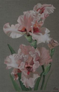 Huile sur toile 60x40 cm: Iris roses