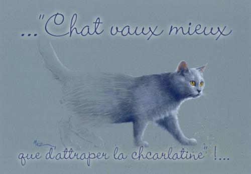 carte MEZ - chat vaut mieux...