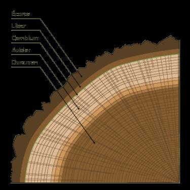 cr ation de roger mahler l 39 univers du parquet 14332. Black Bedroom Furniture Sets. Home Design Ideas