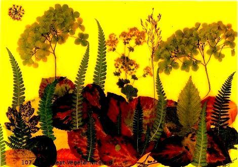 107.Fougères sur la Colline.  PAYSAGE  Création réalisé avec de la Viorne, de la fougère, des hortensias.  L'hortensia est une beauté froide La fougère est la fascination.  Reproduction Plastifiée 30/42 CM.peut être encadrée, ou servir de SET DE TABLE  Vendu en DUO frais port compris. (possible, modèles différents)  Pour 4 achetés le 5°Gratuit