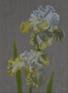 Huile sur toile 40x30 cm: Iris jaune et blanc.