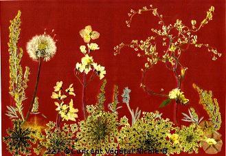 227.FORET BLANCHE (pissenlit - absinthe - polygonum - carotte sauvage - deutzia- liseron) Je réalise des sets de table avec des fleurs naturelles sélectionnées par mes soins, selon les saisons dans mon jardin & différents végétaux.  Ces reproductions se présentent sous un format cartonné de 40/60 cm plastifié.(peuvent être également encadrés ou tirées sur toile)  Duo expédié à partir de 30 Euros. Pour 4 achetés le 5°Gratuit  Tous les détails sur le site internet