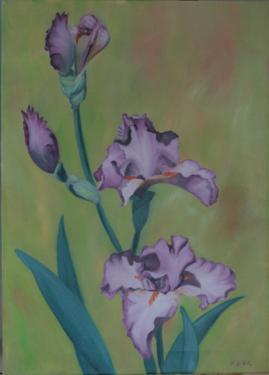 Huile sur toile 60x50 cm: Iris sur fond vert
