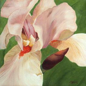 Huile sur toile 30x30 cm: Iris (10).