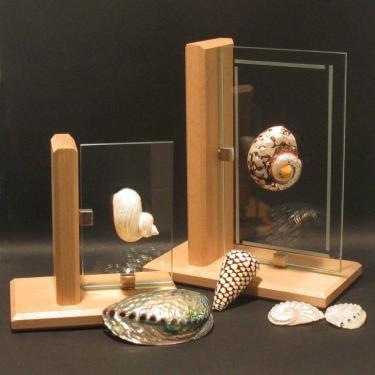 Objet de décoration ou trophée. Support en hêtre clair massif. Voir le site vitrine ALGAN DE LUX pour les dimensions proposées, les tarifs et les coquillages disponibles.