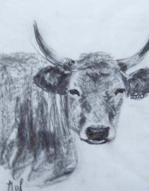La vache qui ne rit pas, fusain