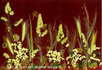 Mod�le.192 GRAMINEES DOREES   Deutzia Gramin�es Liseron   R�alis� avec des fleurs et diff�rents v�g�taux.   Reproduit sur support plastifi� 160 microns. Dimensions30x42cm   LE DUO exp�di� en COLISSIMO dans les 5 jours qui suivent la r�ception du r�glement  Pour 4 achet�s le 5�Gratuit