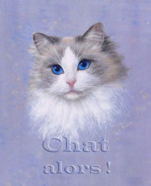 carte MEZ - chat alors!