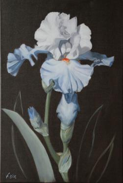 Huile sur toile 40x60 cm: Iris blanc et bleu clair