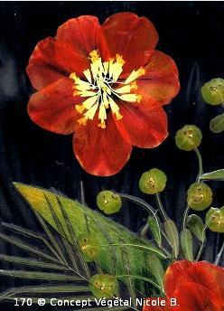 Mod�le.170 FLEUR DE TULIPE  Coucou : Retard ! Euphorbe :  Tulipe :   R�alis� avec des fleurs et diff�rents v�g�taux.  Reproduit sur support plastifi� 160 microns. Dimensions30x42cm   LE DUO exp�di� en COLISSIMO dans les 5 jours qui suivent la r�ception du r�glement  Pour 4 achet�s le 5�Gratuit