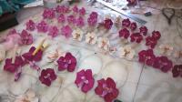 la nouvelle collection orchidées