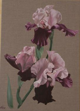 Huile sur toile 60x50 cm: Iris pourpres.