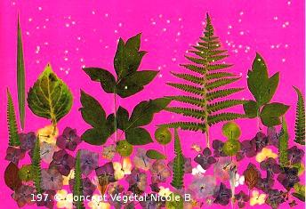 Mod�le.197  FORET ROSE   Euphorbe : Foug�re : Sinc�rit�. Hortensia : Extravagance.  R�alis� avec des fleurs et diff�rents v�g�taux.   Reproduit sur support plastifi� 160 microns. Dimensions30x42cm   LE DUO exp�di� en COLISSIMO dans les 5 jours qui suivent la r�ception du r�glement  Pour 4 achet�s le 5�Gratuit