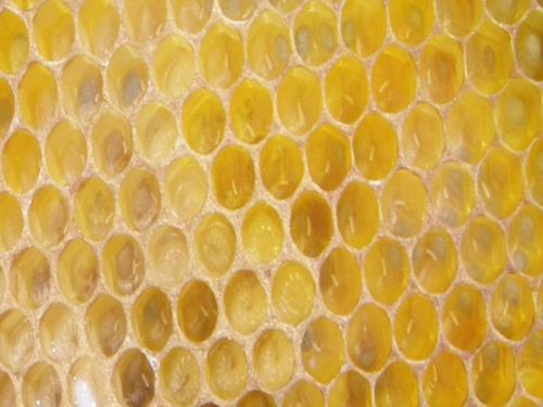 oeufs d'abeilles  Exemple de l'une des 14  photographies montées sur le cadre amovible de la ruche pédagogique.