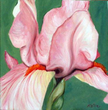 huile sur toile 30x30 cm: Iris (11).