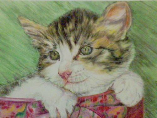 Chat Crayons aquarellables sur toile