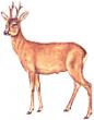 Logo de bernard pethe naturaliste