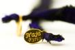 Logo de Nadia Jamgotchian Naja & Merveilles