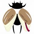 Logo de Marjorie GOETZ Atelier LIVRELIURE
